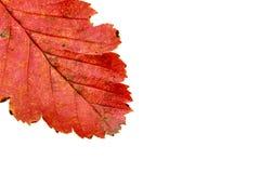 6个秋天颜色 免版税库存照片