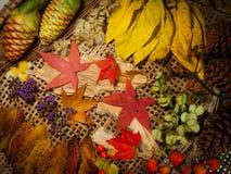 6个颜色秋天 免版税图库摄影