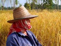 6农夫 免版税图库摄影