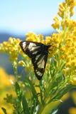6只蝴蝶野花 库存图片