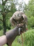 6只鸟狩猎 库存图片