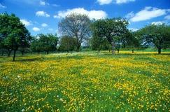 6朵花草甸 库存照片
