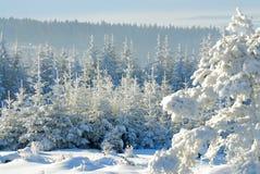 6森林没有多雪 免版税库存照片
