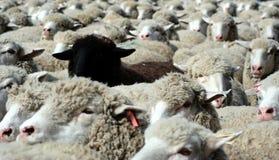 6没什么羊毛 免版税库存图片