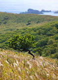 6海岸线结构树 免版税库存图片