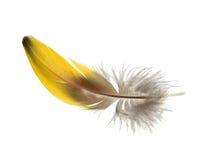 6羽毛 库存图片