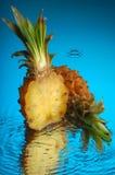 6菠萝 免版税库存图片