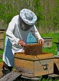 6蜂农 库存图片