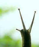6蜗牛 免版税库存照片