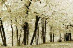 6黑色黄柏软绵绵榆木树丛白色 图库摄影