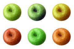 6 äpplen colour olikt Arkivfoton