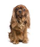 6 αλαζόνας έτη βασιλιάδων Charle Στοκ εικόνα με δικαίωμα ελεύθερης χρήσης