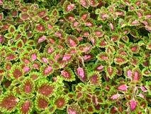 6 κήποι λουλουδιών Στοκ Εικόνα