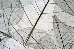 6 ξηρά φύλλα Στοκ Φωτογραφίες