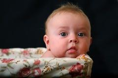 6 στενοί μήνες μωρών portrate Στοκ Εικόνες
