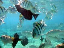 6 ψάρια Στοκ φωτογραφία με δικαίωμα ελεύθερης χρήσης