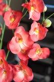 6 искусственних цветков Стоковые Фотографии RF