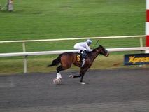 6 лошадей finishline нумеруют гонки к Стоковая Фотография