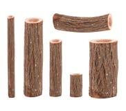 6 стволов дерева стоковые изображения rf
