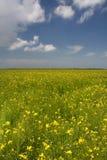 6 цветков qinghai cole фарфора Стоковое фото RF