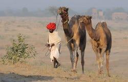 6 2009 kamel puskar ganska november Fotografering för Bildbyråer