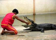 6条鳄鱼农厂samutprakan动物园 免版税库存图片