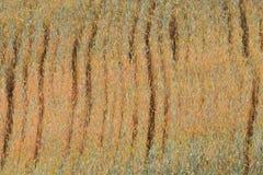 麦子耳朵创造的样式几乎成熟在6月 库存照片