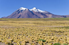 6 altiplano智利miniques 免版税库存照片