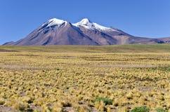 6 altiplano Chile miniques Zdjęcie Royalty Free
