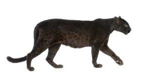 6 ans noirs de léopard Image stock