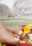 6 aromatherapy fot brunnsortvatten Royaltyfri Foto
