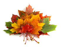 6 autumn colors Στοκ Εικόνα