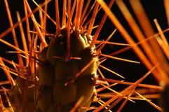 6 backlight cactus Στοκ εικόνα με δικαίωμα ελεύθερης χρήσης