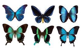 6 blauwe vlinders Royalty-vrije Stock Foto's
