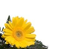6 blommor Royaltyfria Foton