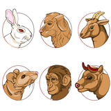 6 chinese zodiac signs Stock Image