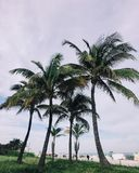 6 Coconut Tree during Daytime Royalty Free Stock Image
