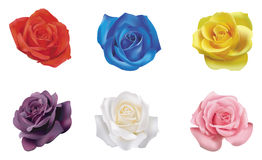 6 color roses collection. Create by vector royalty free illustration