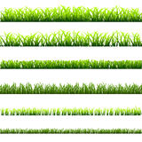 6 different types of green grass Royalty Free Stock Photo
