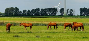6 Horses on Green Field during Daytime Stock Images