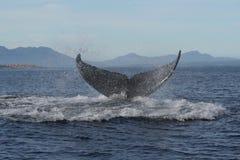 6 humpback ogon Zdjęcia Stock