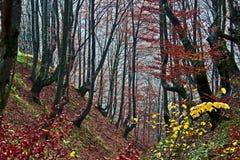 6 jesień las Zdjęcie Royalty Free