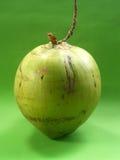 6 kokosów Zdjęcia Royalty Free