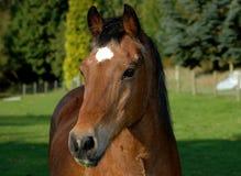 6 konia Fotografia Stock