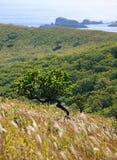 6 linii brzegowych drzewo Obrazy Royalty Free