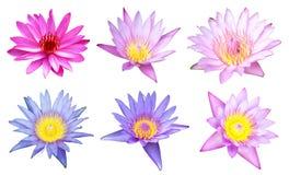 6 lotusblommar på white Royaltyfri Fotografi