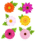 6 margaridas coloridas com folhas, Fotografia de Stock Royalty Free