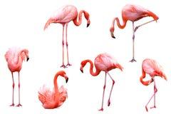 6 mooie Flamingo's royalty-vrije stock foto