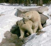 6 niedźwiedzi uścisk Obrazy Stock
