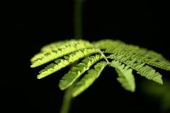 6 nya leaves Fotografering för Bildbyråer